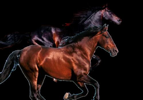 inwestowanie w konie wyścigowe